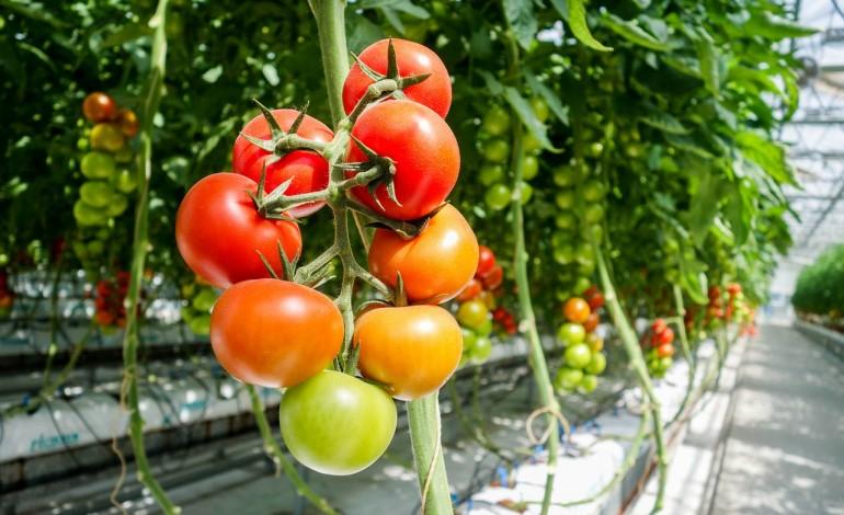 Zbyt duża liczba regulacji ogranicza rolnikom w UE dostęp do innowacyjnych środków ochrony roślin. Europejska żywność traci na konkurencyjności