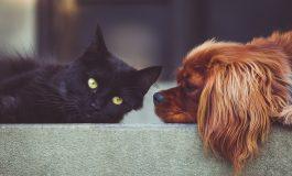 MS: weszła w życie ustawa o zwiększeniu ochrony prawnej zwierząt