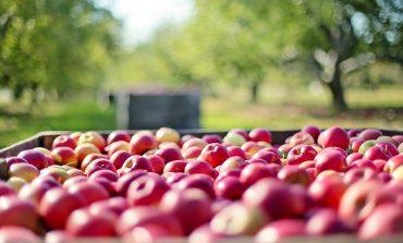 UOKiK dla rolnictwa - kontrole w skupach