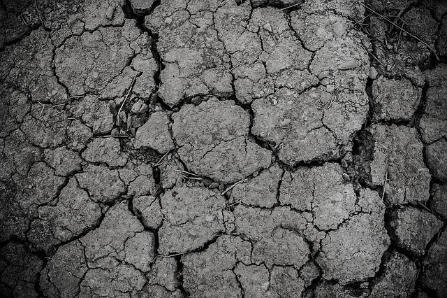 Rolnicy poszkodowani przez suszę mogą ubiegać się o pomoc do 31 października. Pierwsze gospodarstwa już otrzymały rekompensaty