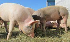 MRiRW: pomoc dla producentów rolnych