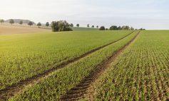 Zmiany w znakowaniu żywności bez GMO. Nowe przepisy mogą jednak wprowadzać konsumentów w błąd