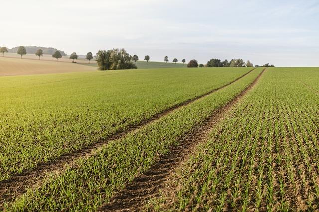 Powszechny Spis Rolny w 2020 roku. Rolnicy nie będą mogli odmówić udzielenia informacji
